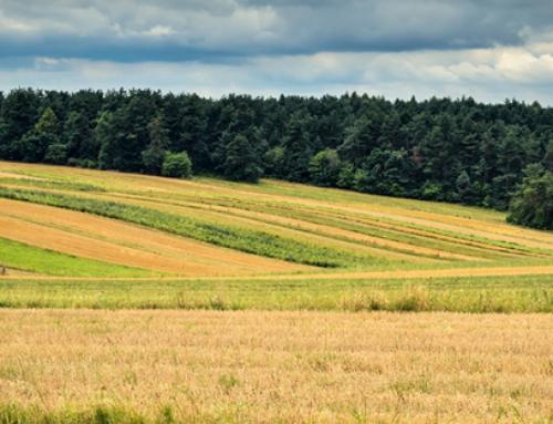 CheckGREEN – dane EO dla zrównoważonego rolnictwa